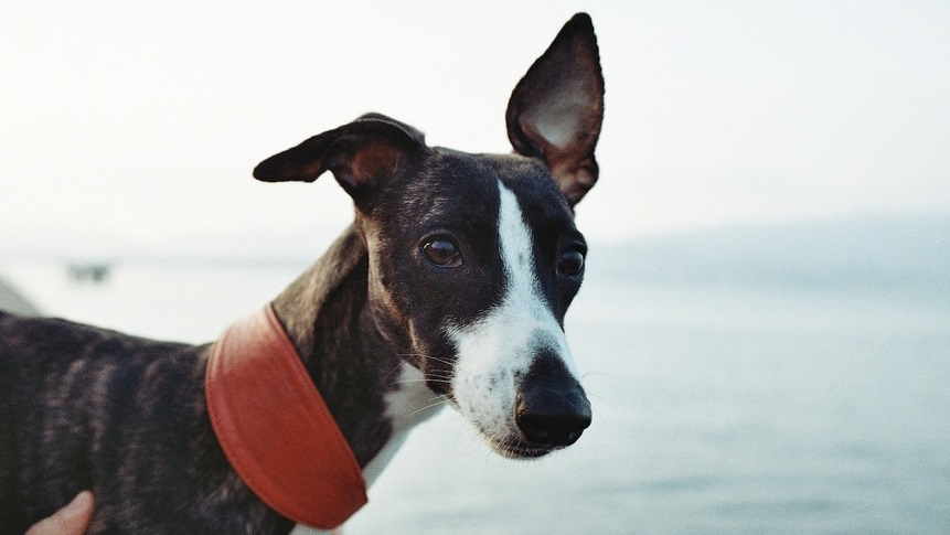 Deutsche Tierrettung ev Hundefutter