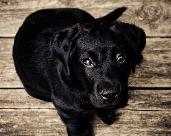 Deutsche Tierrettung ev Sinnvolle Kauprodukte für Hunde