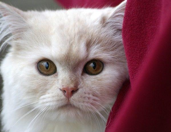 Deutsche Tierrettung ev Katze stubenrein