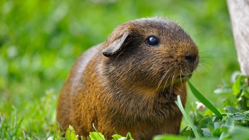 Deutsche Tierrettung ev Tipps zur Haltung von Kleintieren