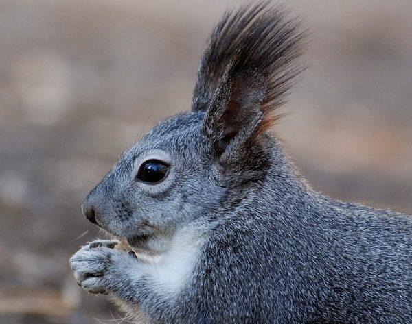Deutsche Tierrettung ev Wildtier Tierarzt