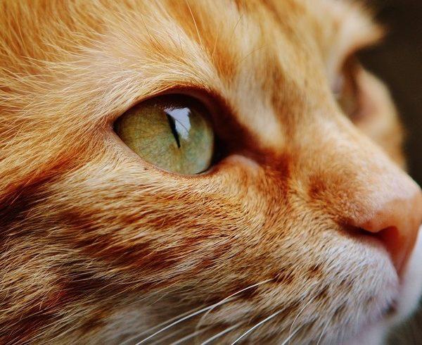 Deutsche Tierrettung ev Katze